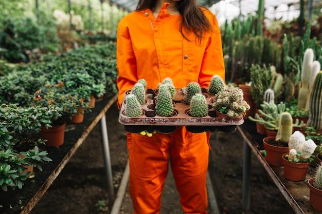 Midsectionmening van een vrouw die succulente installaties houden