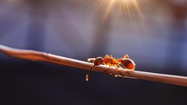 Mier op een takclose-up, macrofoto. lekker zacht zonlicht. het concept van insecten, milieu dag. banner 16: 9