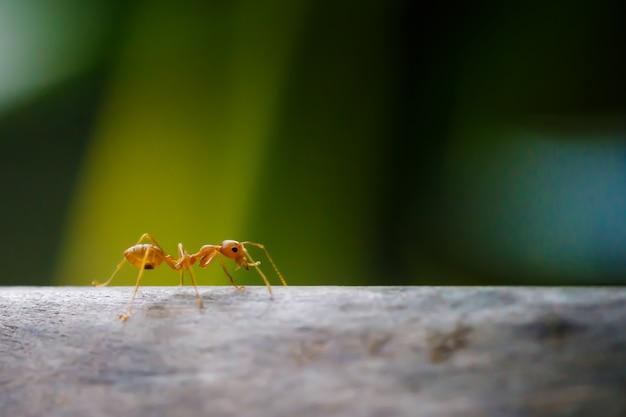 Mieren lopen op takken