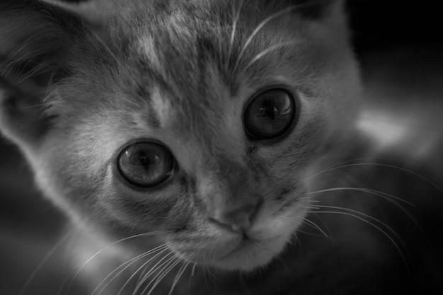 Mijn kleine kitten portret