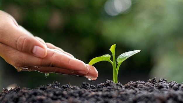 Milieu dag concept. waterdruppels bij de hand om bomen te planten en het milieu te beschermen.