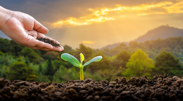 Milieu dag van de aarde in de handen van bomen die zaailingen kweken.