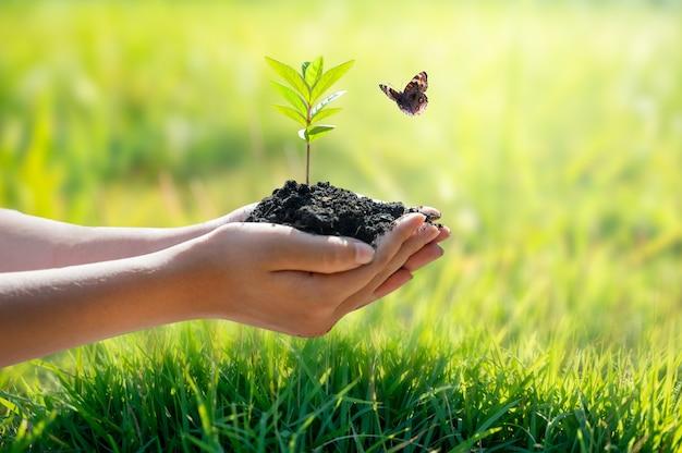 Milieu earth day in de handen van bomen die zaailingen kweken.
