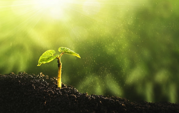 Milieu werelddag van de aarde. jonge plant groeit bij zonlicht.