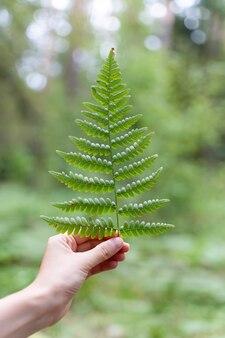 Milieubescherming bos en natuurbehoud concept varen op een dames palmvarenblad met...