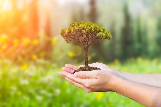 Milieubescherming en natuurbehoud concept groeiende jonge boom in vrouwelijke handen op de b...