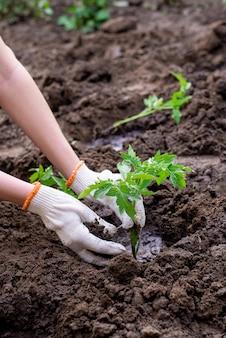 Milieuwerkzaamheden in de tuin