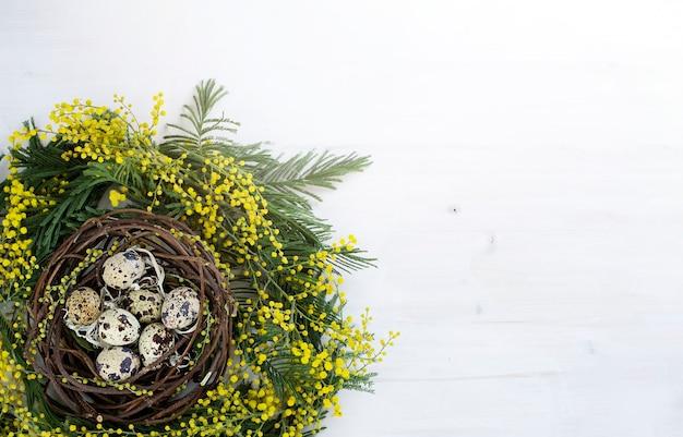 Mimosa krans met kwarteleitjes in het nest afbeelding met kopie ruimte