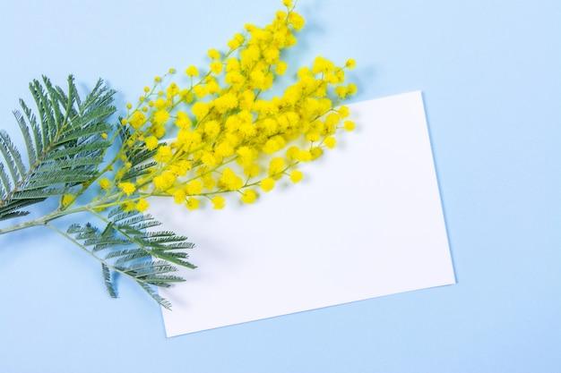 Mimosabloemen op blauwe achtergrond met document blad voor uw bericht of tekst. 8 maart, vrouwendag symbool en lente.
