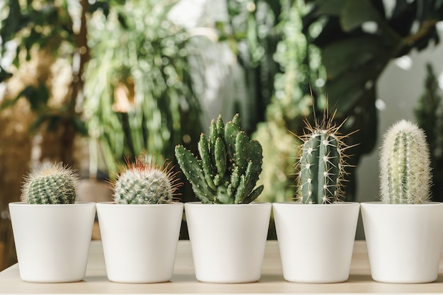 Mini cactus plant ingegoten op wazig botanische tuin