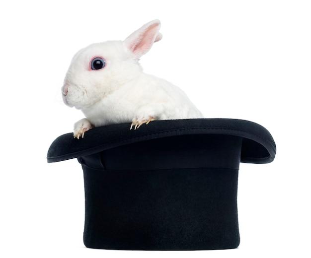 Mini rex konijn goint uit hoge hoed, geïsoleerd op wit