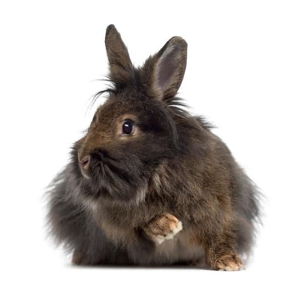 Mini snoei konijn geïsoleerd op wit