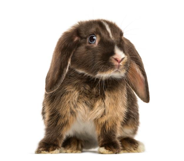 Mini snoei konijn status, geïsoleerd op een witte ondergrond