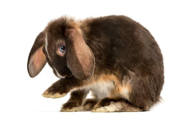 Mini snoei konijnenwassen geïsoleerd op wit
