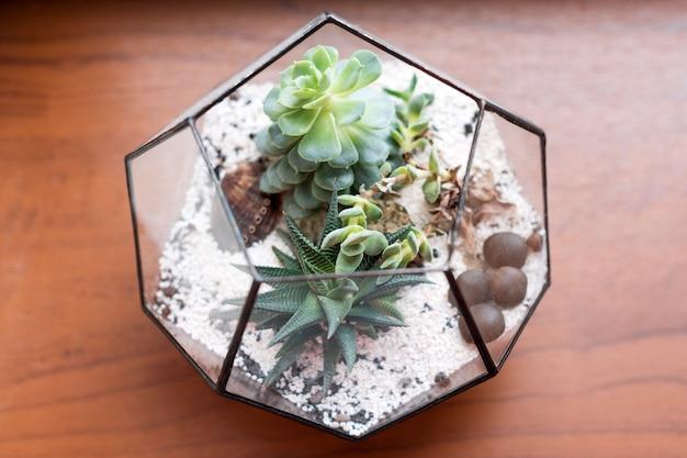 Mini succulente tuin in glazen terrarium op houten vensterbank, vetplanten met zand en rotsen in glazen doos, huisdecoratie-elementen.
