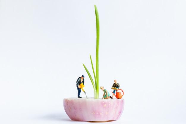 Miniatuurtuiniers die de lenteui op witte achtergrond oogsten