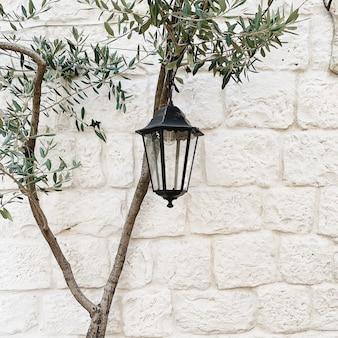 Minimaal concept. eenzame olijfboom met vintage lantaarn tegen witte stenen muur.