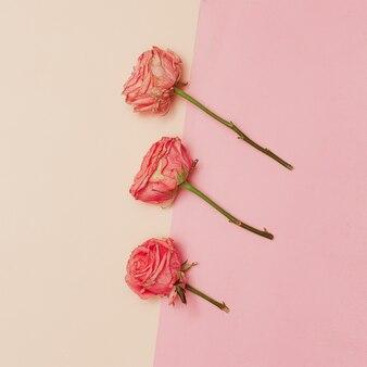 Minimaal creatief ontwerp. roos op pastelachtergrond. hulp bij kunst