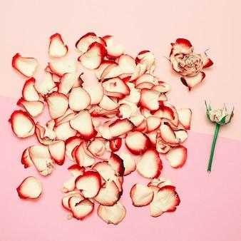 Minimaal creatief ontwerp. rozenblaadjes op pastel achtergrond. hulp bij kunst
