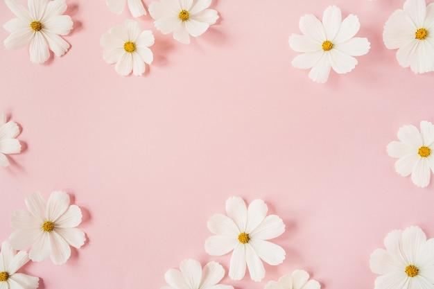 Minimaal gestileerd concept. witte margriet kamille bloemen op lichtroze. creatieve levensstijl, zomer, lente concept
