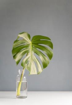 Minimaal tropisch bladassortiment