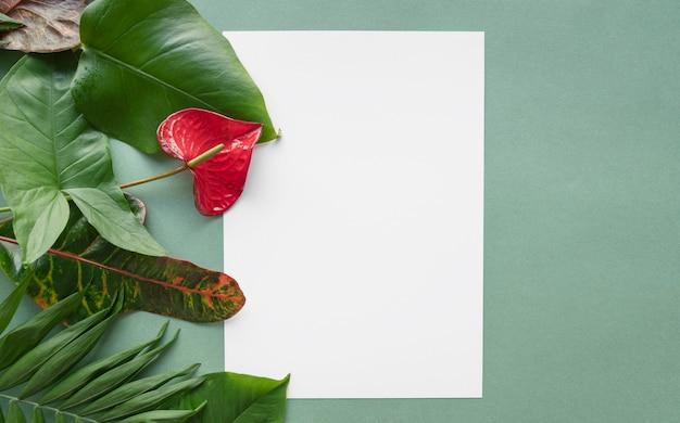 Minimaal tropisch plantenassortiment