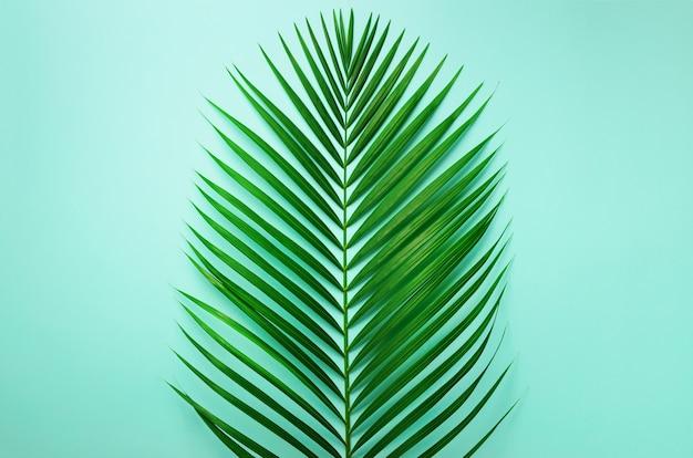 Minimaal zomerconcept. bovenaanzicht groen blad op pittig pastel papier. tropische palmbladen op blauwe achtergrond.