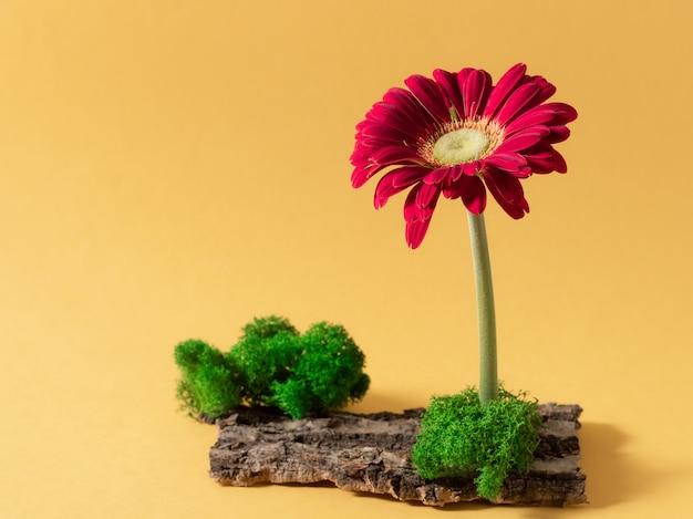 Minimale compositie met gerberabloem, mos en schors