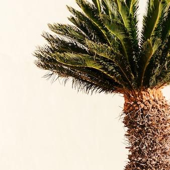 Minimale kunst. tropische sfeer. mini handpalmen
