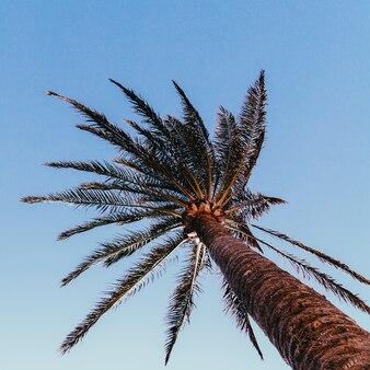 Minimale kunst. tropische sfeer. palmboom
