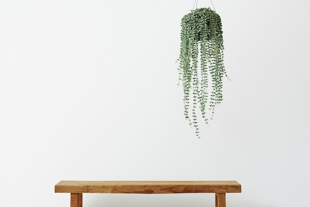 Minimale muur met engelenwijnplant en houten bank