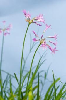 Minimale opstelling van natuurlijke plant