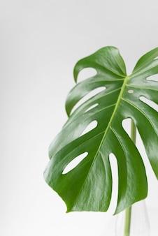 Minimale tropische bladregeling
