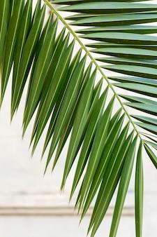 Minimalistisch assortiment van natuurlijke planten op een monochrome achtergrond