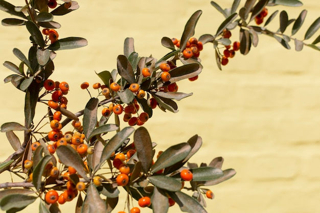 Minimalistisch assortiment van natuurlijke planten