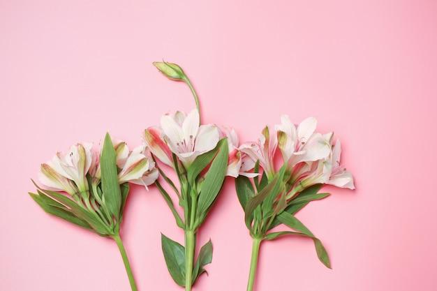 Minimalistisch concept lelies op een roze achtergrond