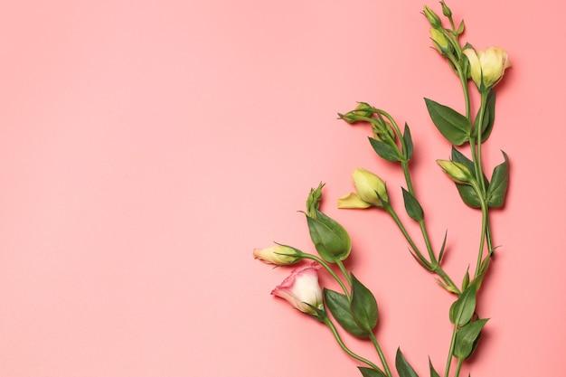 Minimalistisch concept van delicate bloemen op een roze achtergrond
