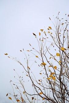 Minimalistisch herfstlandschap, zeldzame droge herfstbladeren op boomtakken tegen een bewolkte blauwe hemel.