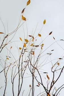 Minimalistisch herfstlandschap