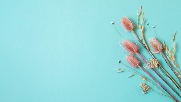 Minimalistische compositie van natuurlijke plant op een monochrome achtergrond