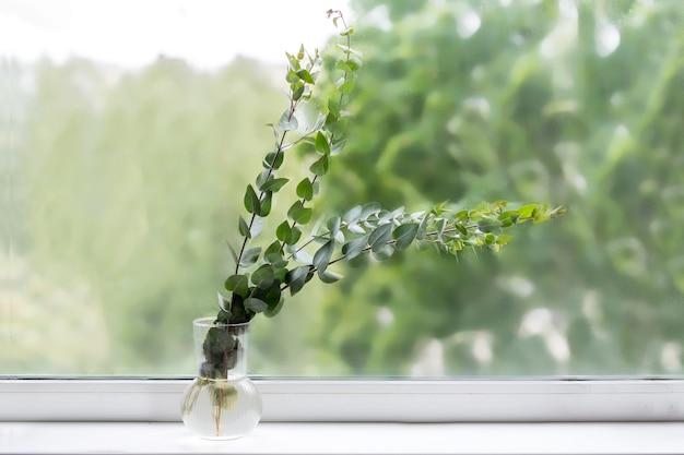 Minimalistische home decor eucalyptus in een stijlvolle vaas op het raam. hoge kwaliteit foto