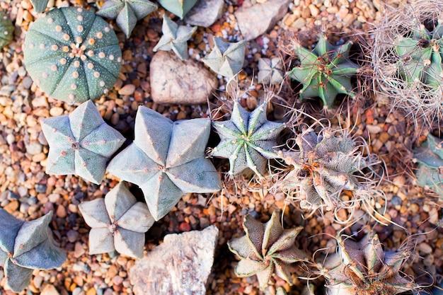 Minituin van cactussen en vetplanten, vorm van sterren