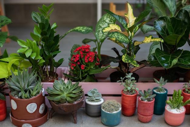 Minituin van vetplanten en cactus in potten huistuin