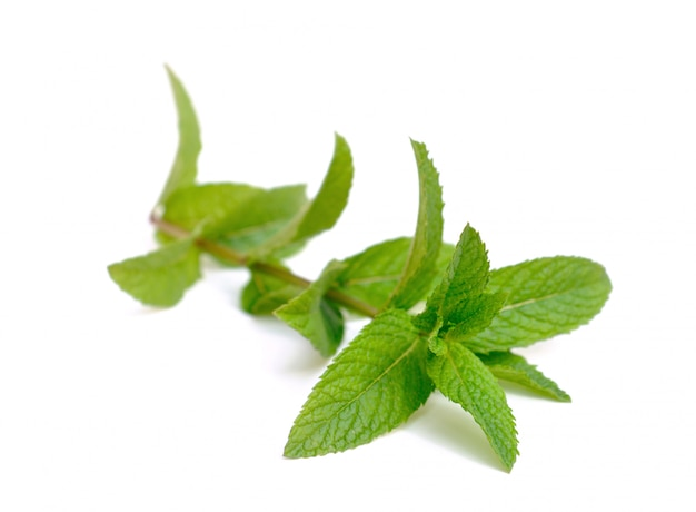 Mint blad geïsoleerd