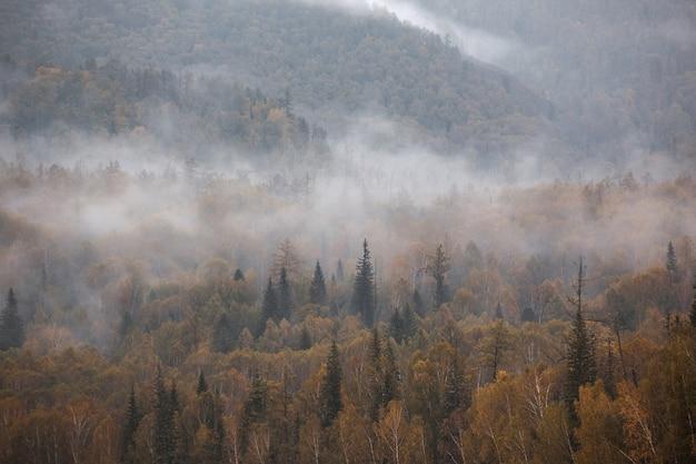 Mist in de bergen. bewolkt. woud.
