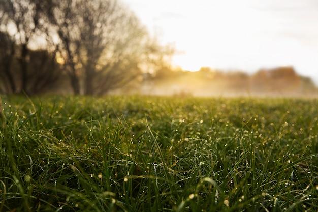 Mist in het ochtendpark. zonsopgang met mist in het bos. schoonheid landschap