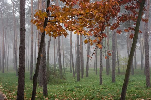 Mist in het park
