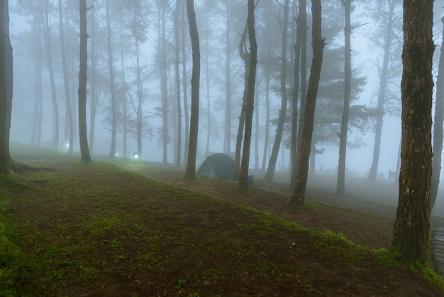 Mist in morning mon sone view point, doi pha hom pok nationaal park, thailand