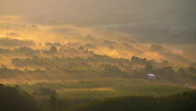 Mist over het boslandschap, prachtige fotografie