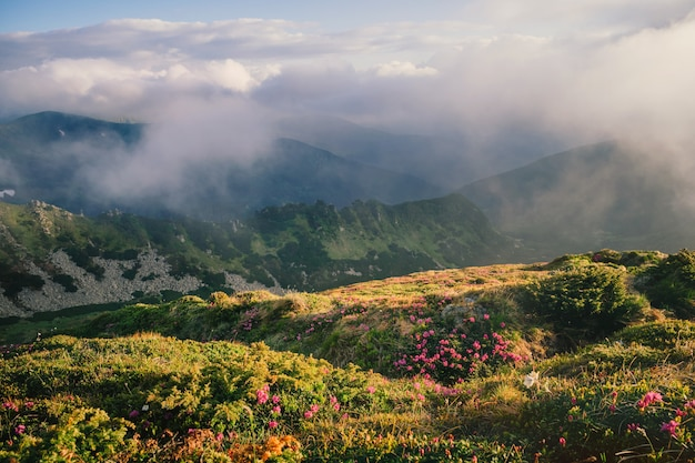 Mistig berglandschap met bloeiende rododendron bloemen